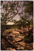 Trees in the centre of Australia by waitfortheblackout