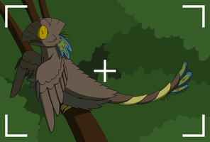 Sheo the Mixed Coat Fighter Hawk by PurpleHunterKitty