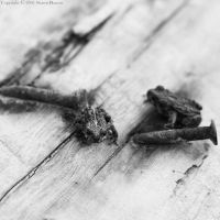 Two Toads Two Nails - bw II by wroth