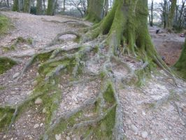 WoodburyCastle- Tree Roots 2 by andynortonuk