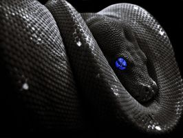 Snake wallpaper. by Shadow-of-Nemo