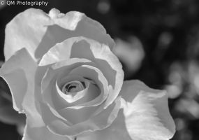 Black and White, Sun and Shadow by bobtheenchantedone