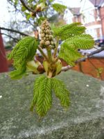 Horse chestnut sprite by Jack-In-The-Green