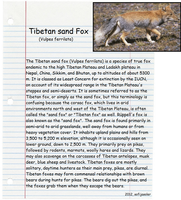 Tibetan sand Fox by sofijasoler