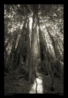 Creepy Hollow by takitus