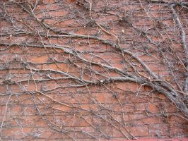 sci-stock - vines and brick by sci-fi-stock