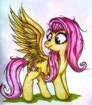 Fluttershy's wings by Tomek2289