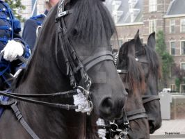 Friesian horse in the army by SuperNoor