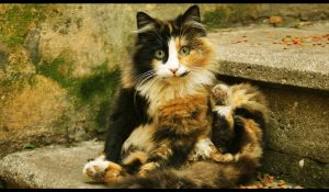 cats 4 by Satine747