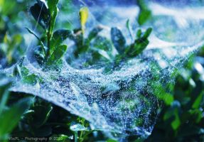 :in small world with spider: by ViniPL