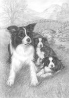 Border Collies by lynniel
