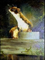 The Stoat - oils by Lynne-Abley-Burton