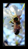 Bee 2 by KNL