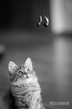The Kitty Series - 3 by NXcamera