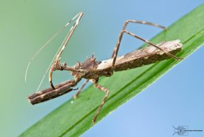 Assassin bug by ColinHuttonPhoto