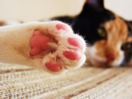 Poppy's Toes by MiDulceLocura