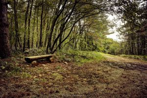 A bench along the path by Koljan