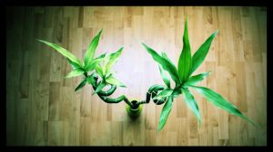 Bamboos... by SphynXz
