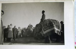 elephant in reception set1 by impalabee