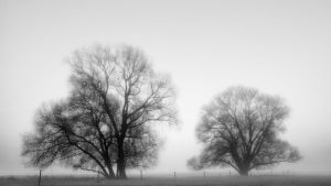 Foggy Morning by 00Michael00A