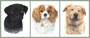 Dog Portraits by Seaff