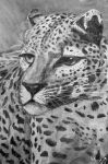 Charcoal Leopard Drawing by Muggi93