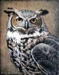 Great Horned Owl by shmeeden