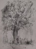 Tree in Charcoal by Yasmin88