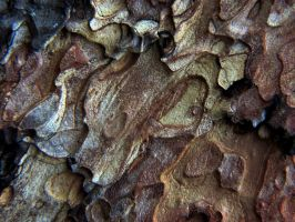 Ponderosa Pine Bark Detail 1 by Barn0wl