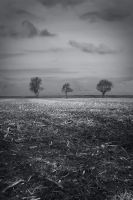 Three Trees revisited by tdiguy