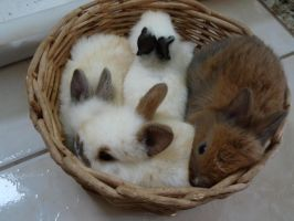 Buunies by Andy-Mii