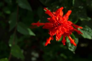 red snowflake by FreedomeSoul88