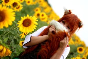Spice and Wolf: Horo by Firss