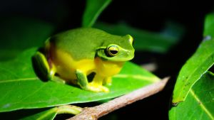 Green frog by manuelo-pro