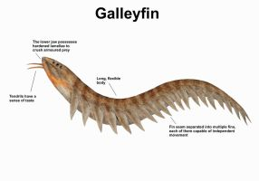 REP: The Galleyfin by Ramul