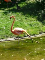Flamingo 19 by Unseelie-Stock