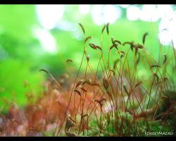 ForestMacro by love1008
