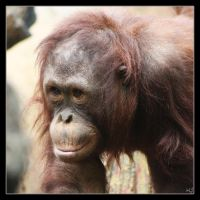 Little Orangutang 2 by Globaludodesign