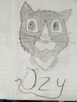 My cat Ozy by Crowbariswin