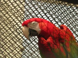 Macaw by JimBobBillyJoeJang