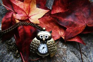 Owl Automn by AnOtherSunrise