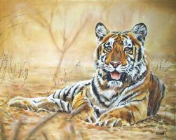 Indian Tiger by andylloyd