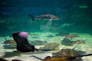 Stingrays Stingrays and Stingrays by Ali-Bear44