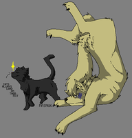 Cats always land on their feet, Shizu-chan~ by TobiSasolovesall