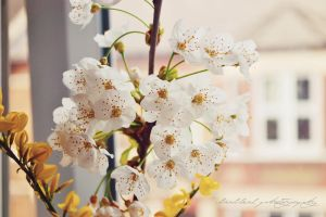Japonese Cherry Blossom by likalileal