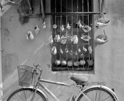 bike and shells by ffoster