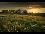 Meadow 2 by MindShelves