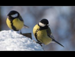 Great tits. Two of them. by Rajmund67