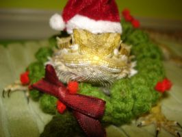 My lizard at Christmas by grean5