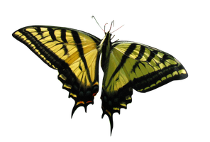 Butterfly png by StockFactory